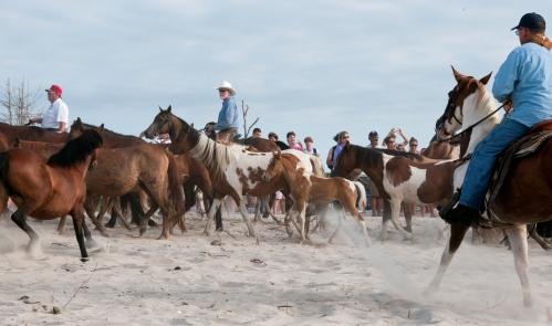 Chincoteague_ponies_by_Bonnie_Gruenberg5